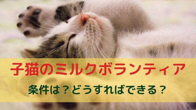 子猫ミルクボランティアって何?