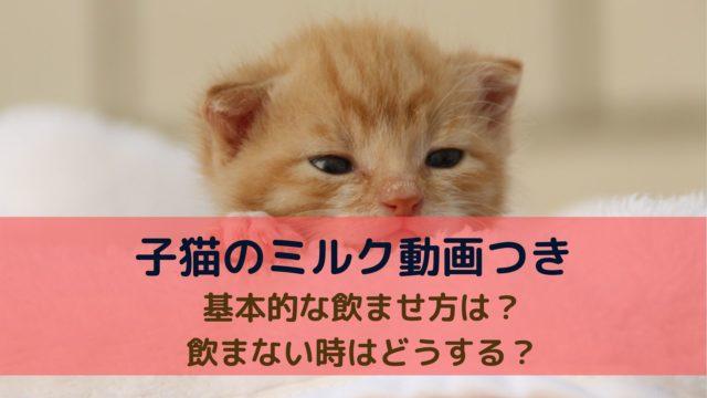 子猫のミルクの飲ませ方!飲まない時はどうする?