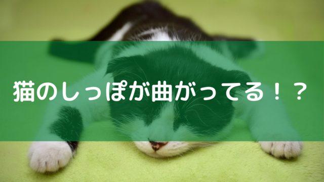 猫のかぎしっぽは幸運を呼ぶって本当?