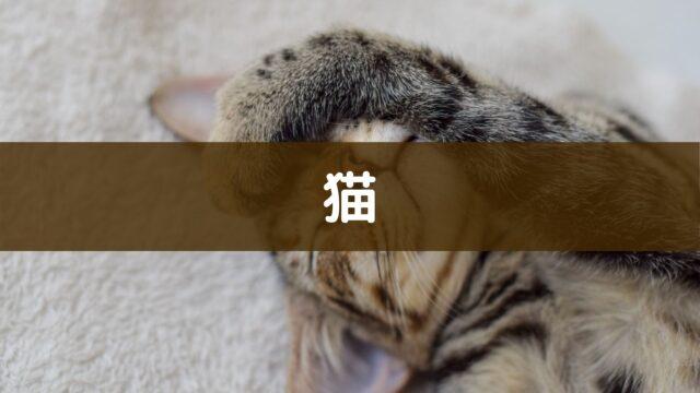 猫や子猫の記事