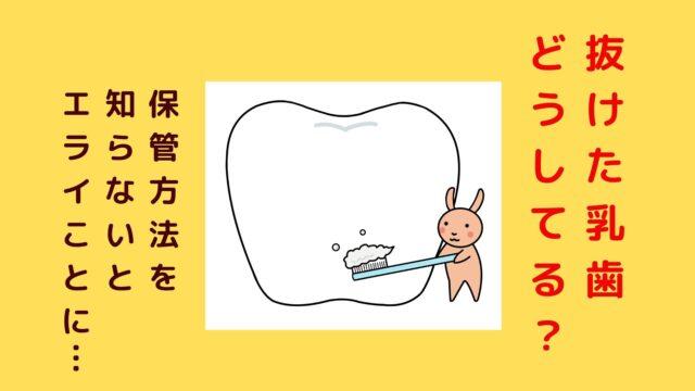 抜けた乳歯の正しい保管方法