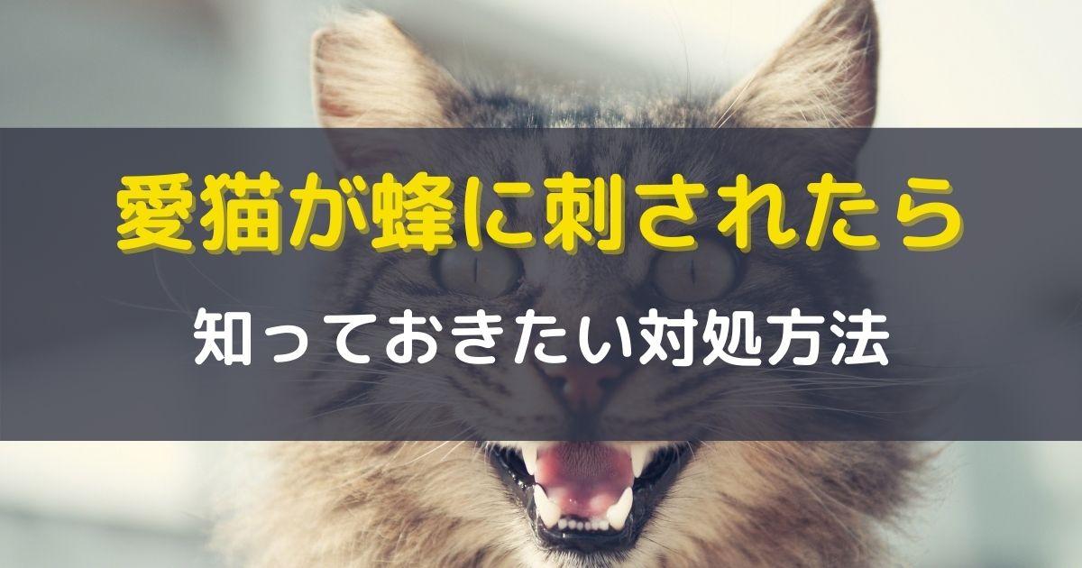 猫が蜂に刺された時の対処方法