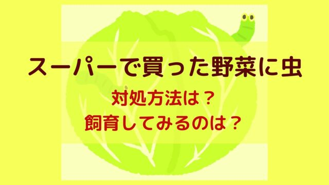 スーパーで買った野菜に虫がいたときの対処方法は?